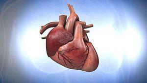 ¿Para qué sirve el corazón?